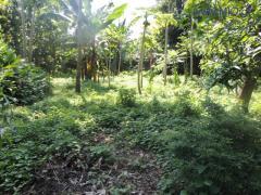 Terreno En Venta En Retalhuleu, Guatemala